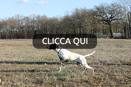 cuccioloni pointer